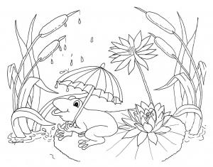 Grenouille et pluie