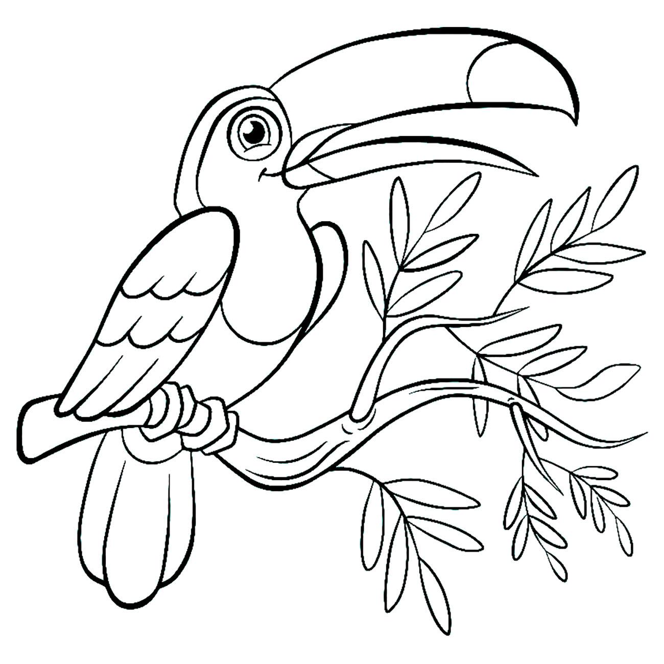 Toucan Coloriage D Oiseaux Coloriages Pour Enfants