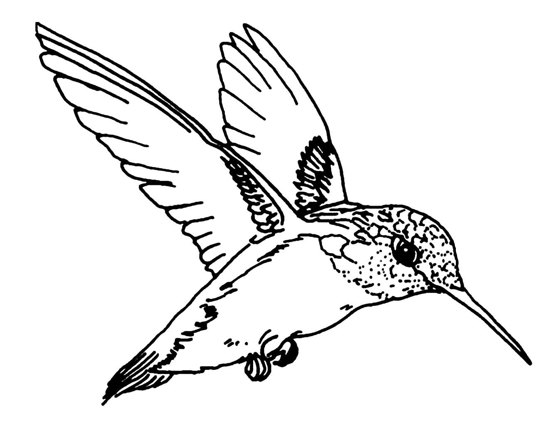 coloriage d'un joli petit oiseau en vol