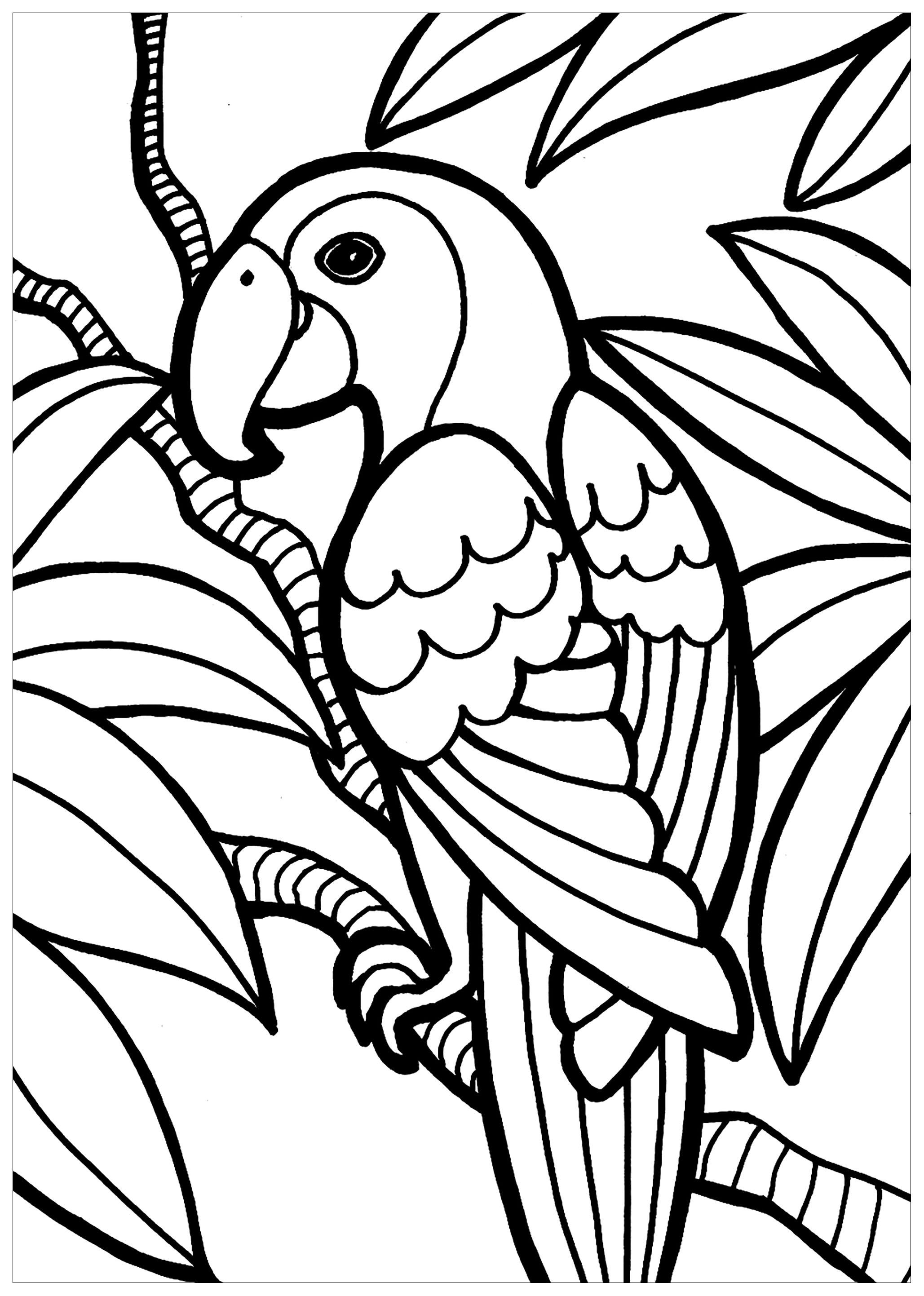 Perroquet - Coloriage d'Oiseaux - Coloriages pour enfants