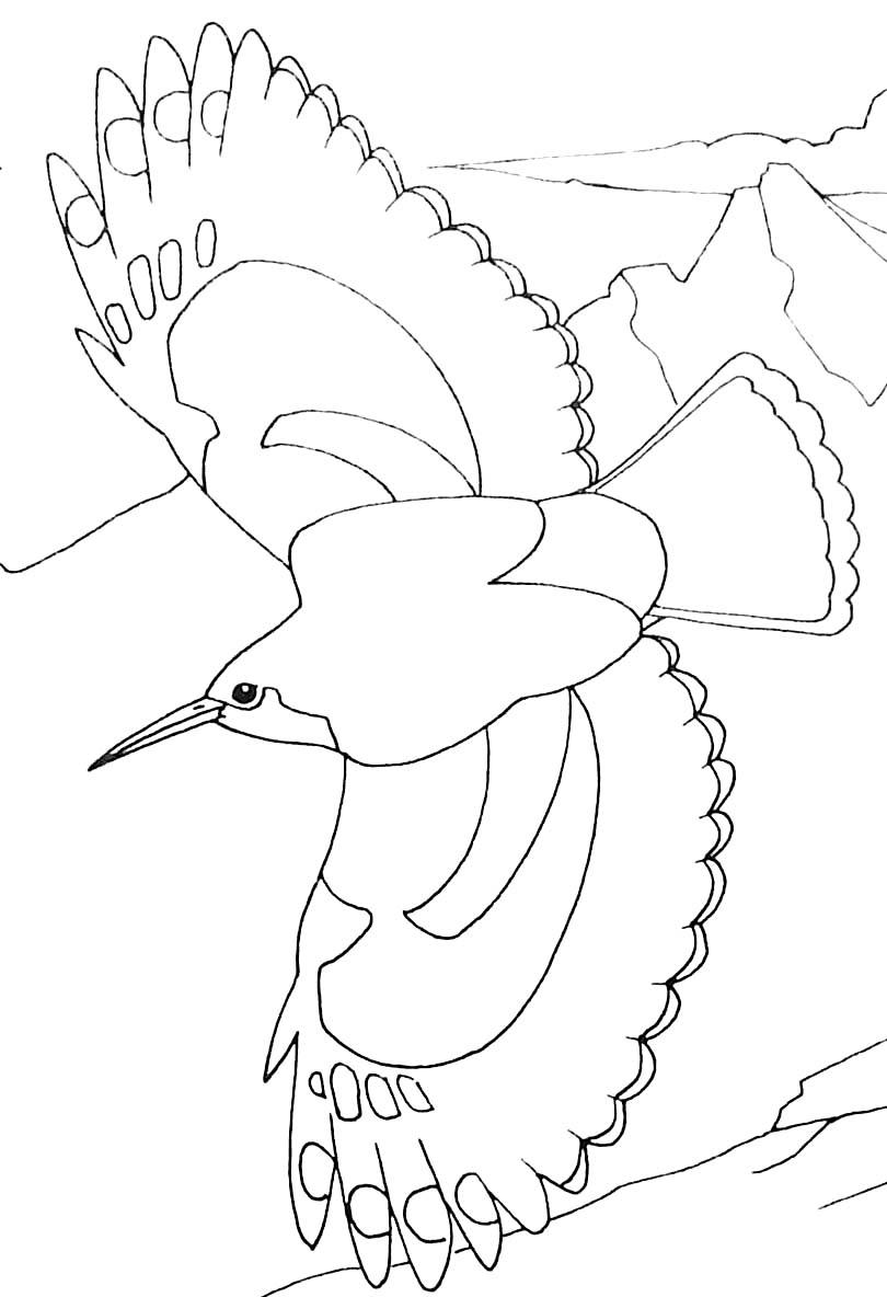 Oiseaux 2 coloriage d 39 oiseaux coloriages pour enfants - Dessin d oiseau ...
