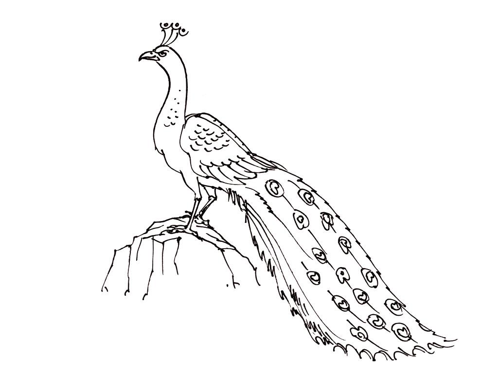 Oiseaux 3 coloriage d 39 oiseaux coloriages pour enfants - Dessin d oiseau a imprimer ...