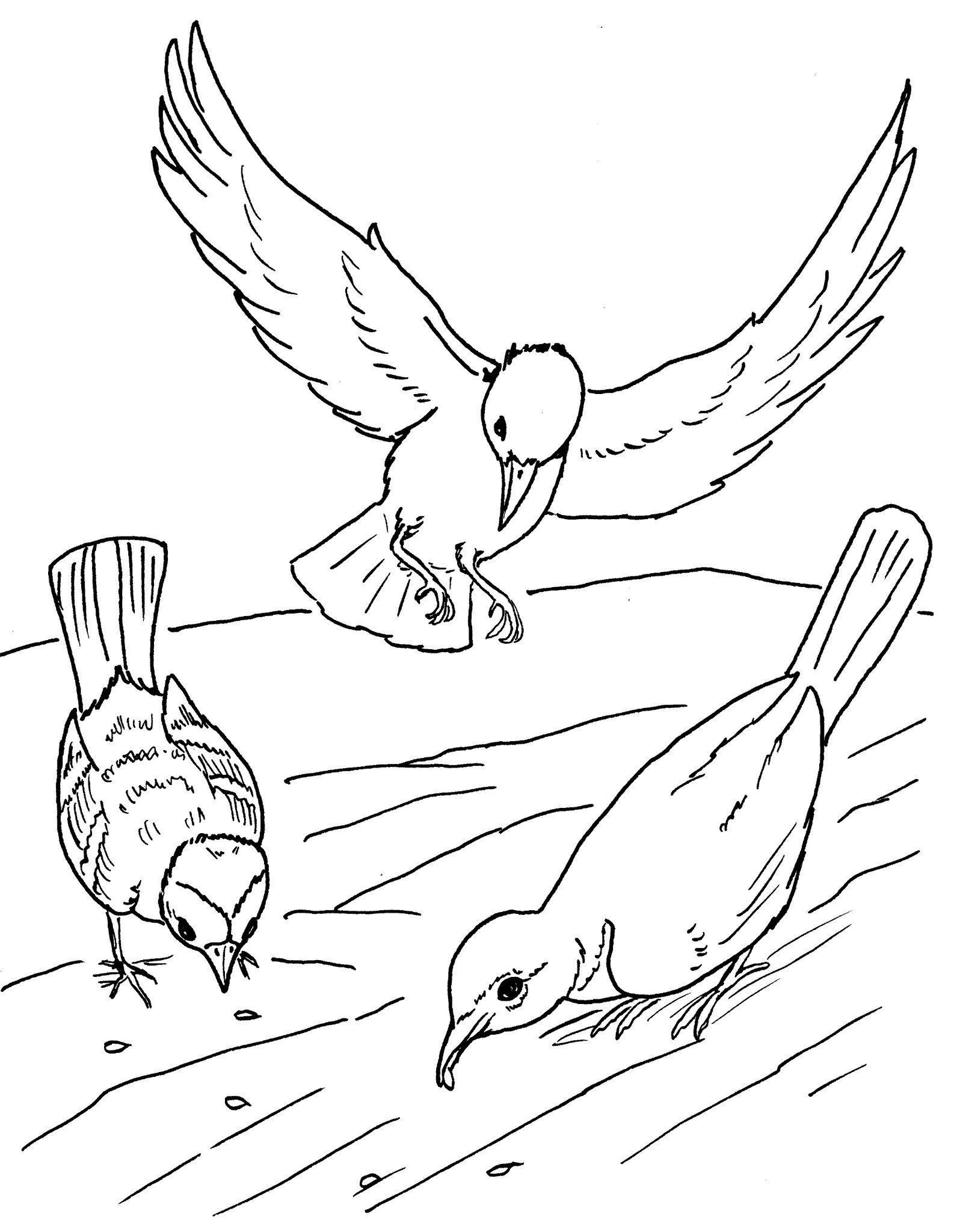 Oiseaux 4 coloriage d 39 oiseaux coloriages pour enfants - Un oiseau dessin ...