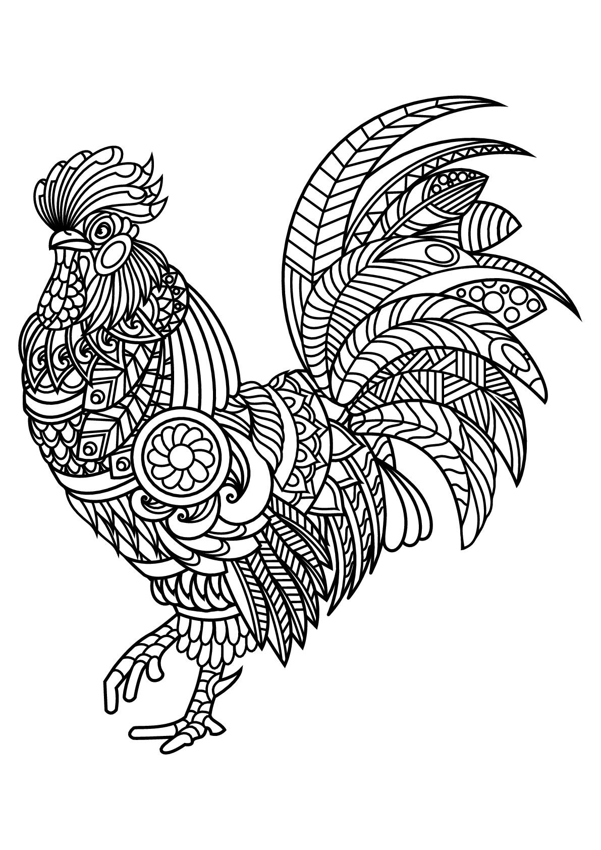 Coq - Coloriage d'Oiseaux - Coloriages pour enfants