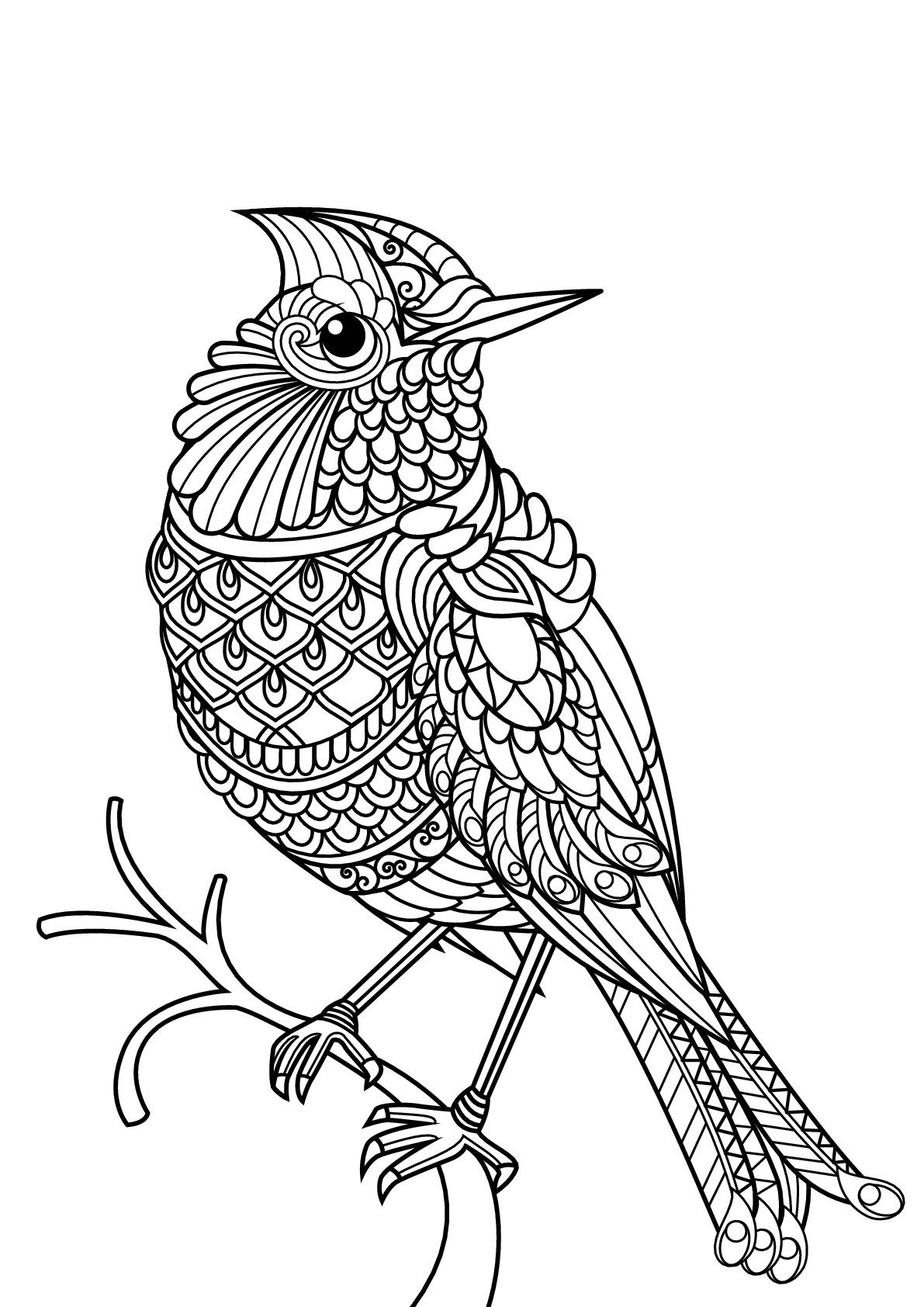 Oiseau Coloriage D Oiseaux Coloriages Pour Enfants