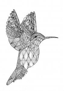 Coloriage joli colibri
