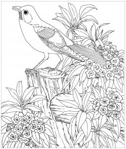 Coloriage oiseau realiste