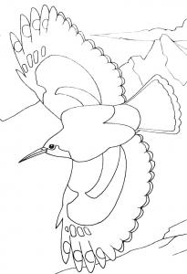 Coloriage oiseaux 2