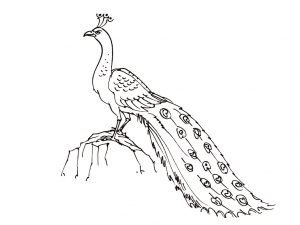 coloriage-oiseaux-3 free to print