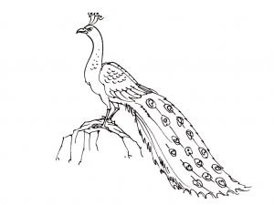 Coloriage oiseaux 3