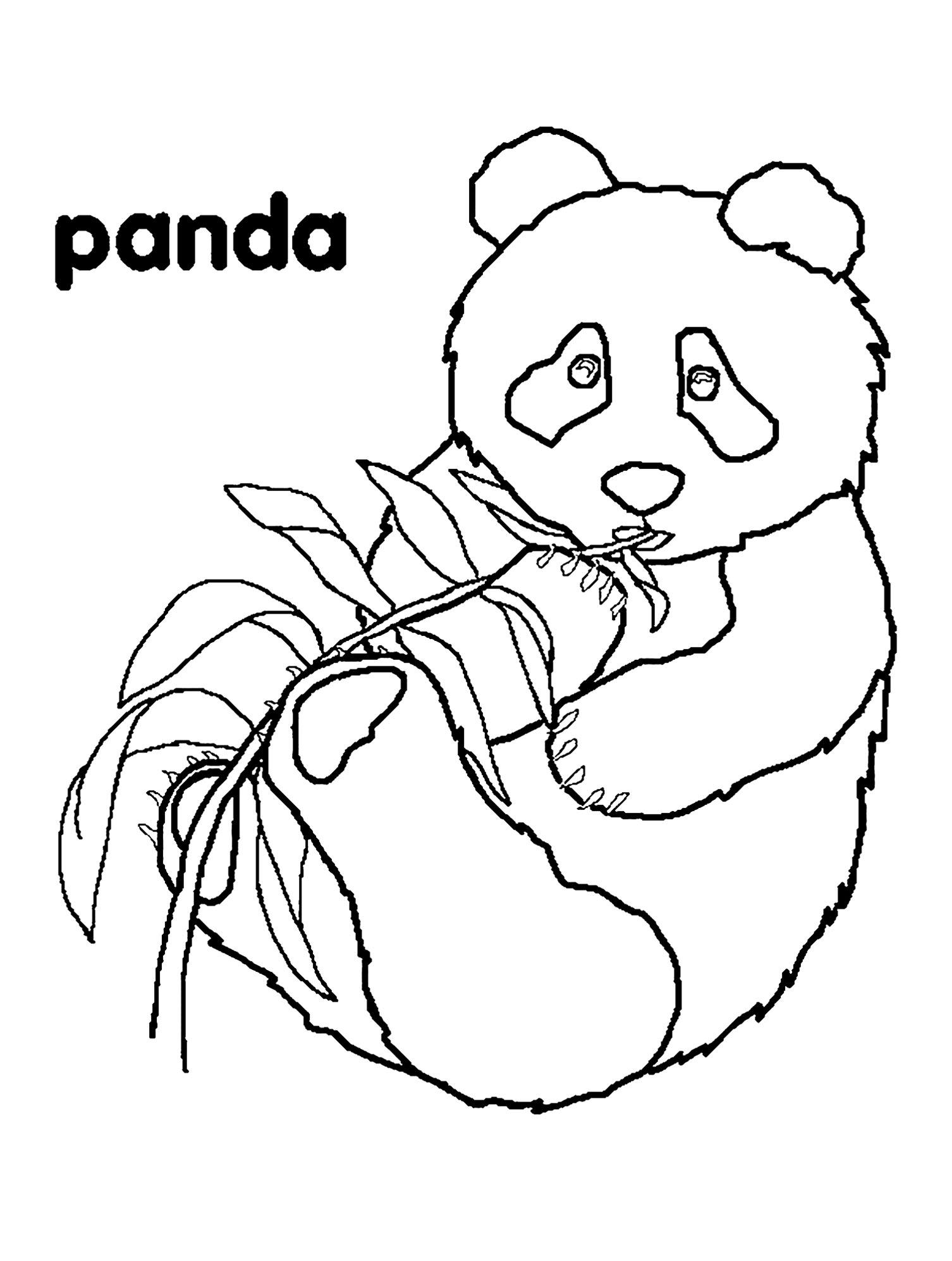 Coloriage de panda simple