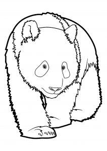 Coloriage de panda à telecharger gratuitement