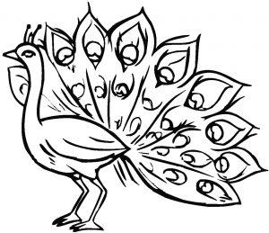 Image de paon à télécharger et colorier