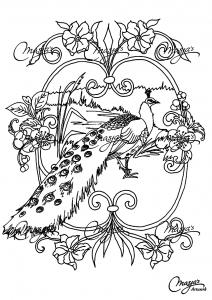 Coloriage de paon à imprimer gratuitement