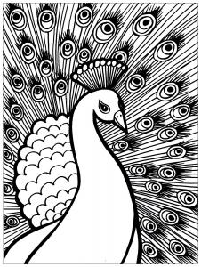 Coloriage de paon gratuit à colorier