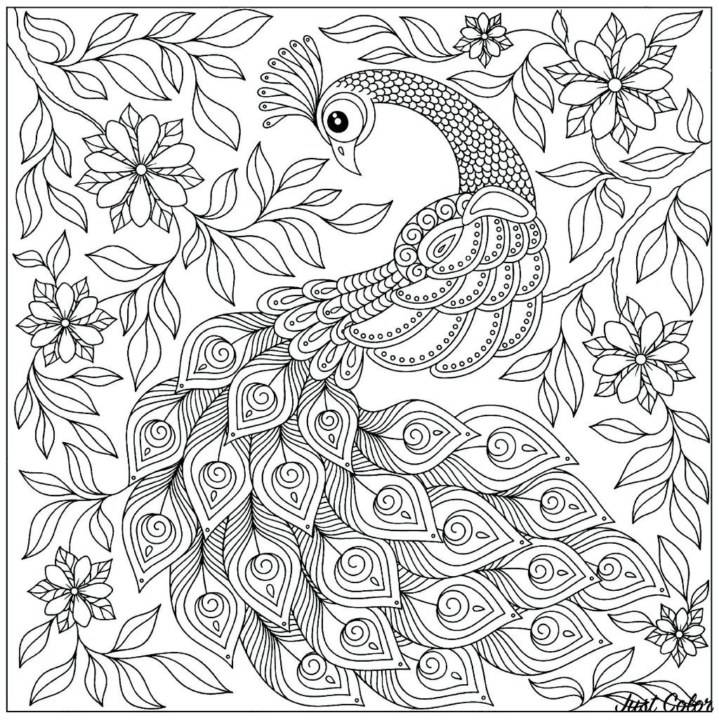Coloriage amusant de paon à imprimer et colorier