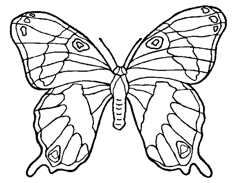 Dessin de papillon colorier coloriage de papillons - Dessins papillons ...