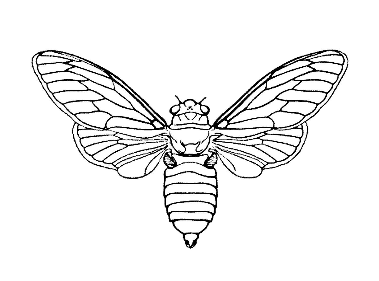 Coloriage de Papillons à imprimer pour enfants