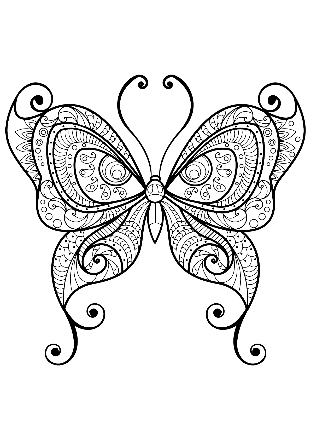 Papillon avec motifs magnifiques & complexes - 10