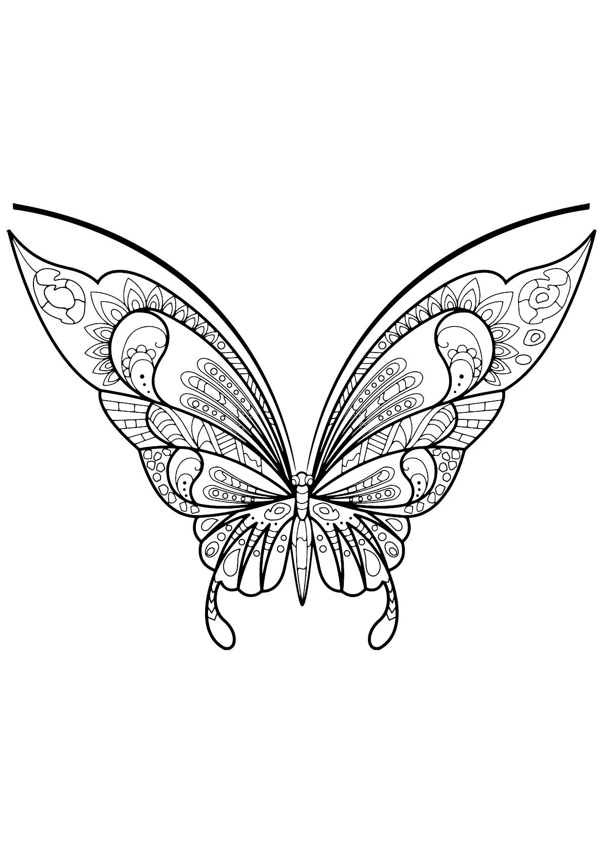Papillon avec motifs magnifiques & complexes - 7