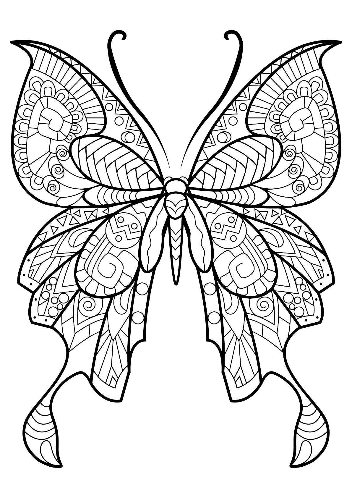 Papillon avec motifs magnifiques & complexes - 8