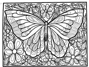 Superbe papillon avec beau fond