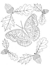 coloriage joli papillon d automne