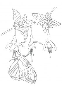 coloriage joli papillon sous fleurs