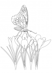 coloriage joli papillon sur fleurs