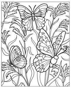 coloriage magnifiques papillons