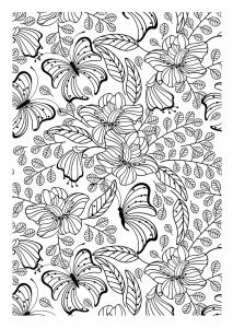 coloriage superbes papillons