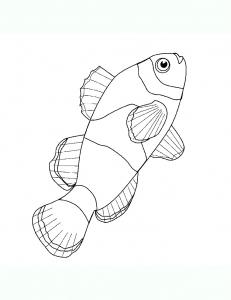 Image de poissons à imprimer et colorier