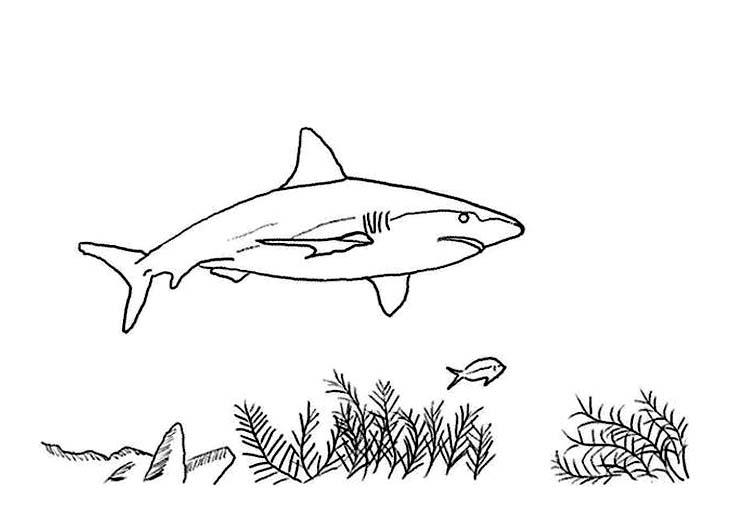 Requin 1 coloriage de requins coloriages pour enfants - Coloriage de requin a imprimer ...
