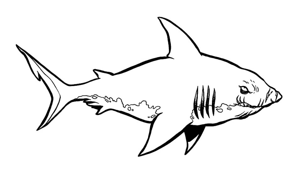 Requin 12 coloriage de requins coloriages pour enfants - Coloriage de requin a imprimer ...