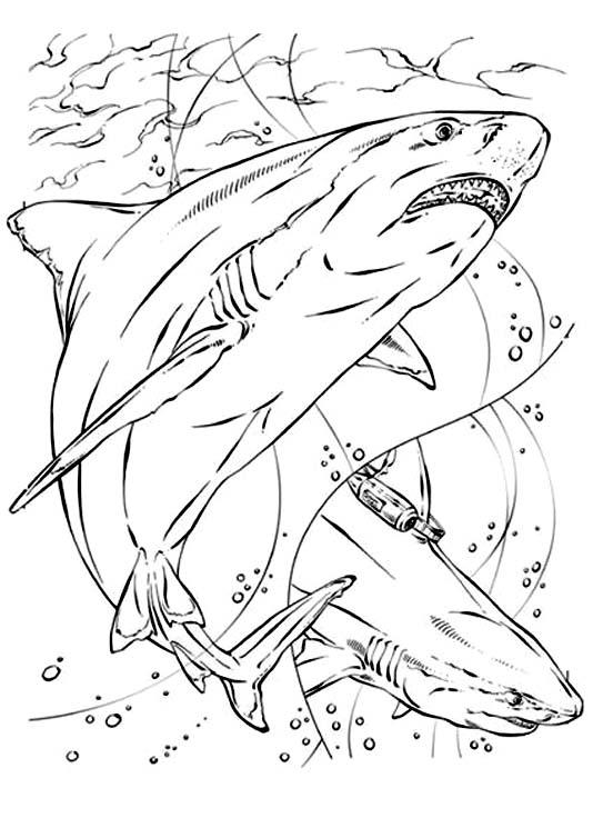 Requin 9 coloriage de requins coloriages pour enfants - Requin en dessin ...