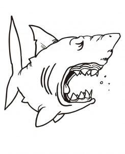 Requin endormie