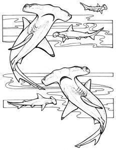 Requins marteaux