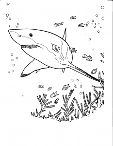 Coloriage requin 13