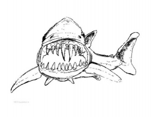 coloriage-requin-4 free to print