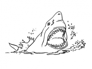 coloriage-requin-5 free to print