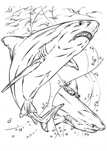 coloriage-requin-9 free to print