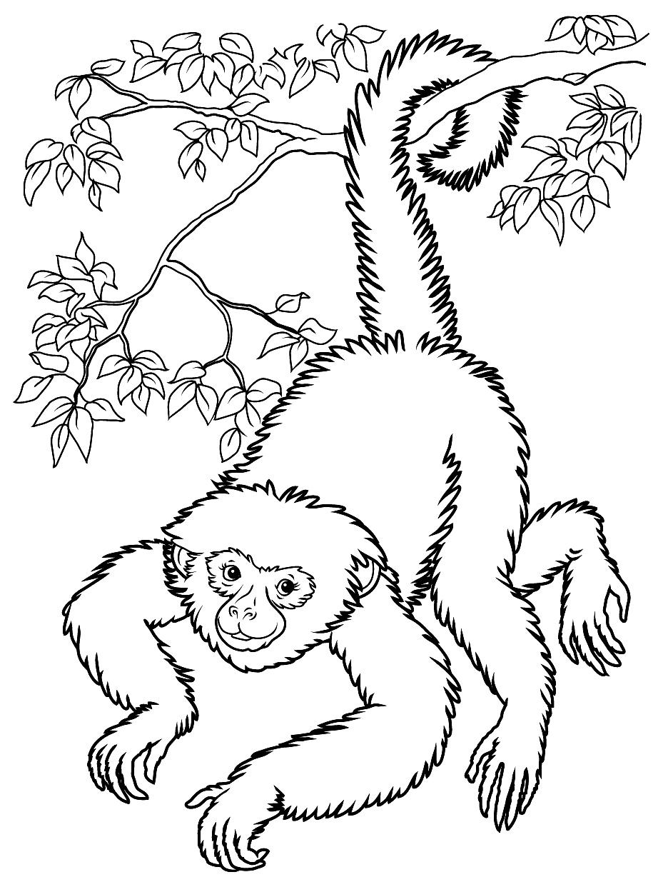 Un singe en pleine acrobatieA partir de la galerie : Singes