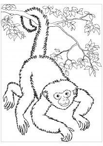 Coloriage de singe gratuit à colorier