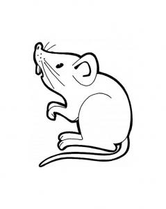 Coloriage de souris à télécharger