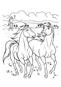 2 beaux chevaux