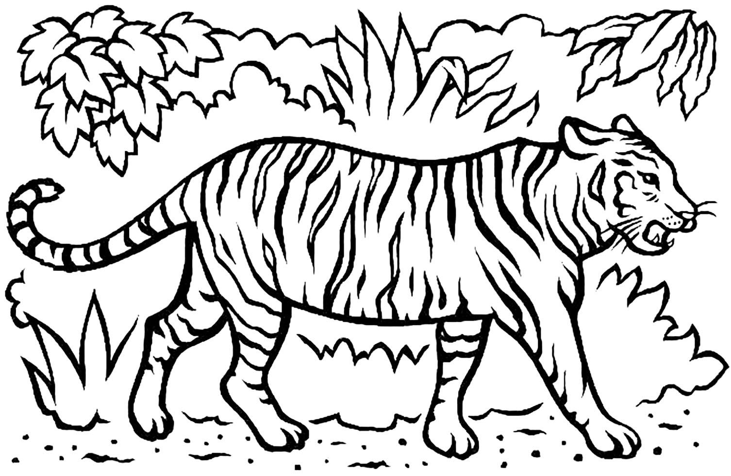 Coloriage de tigre à imprimer pour enfants - Coloriage de Tigres - Coloriages pour enfants