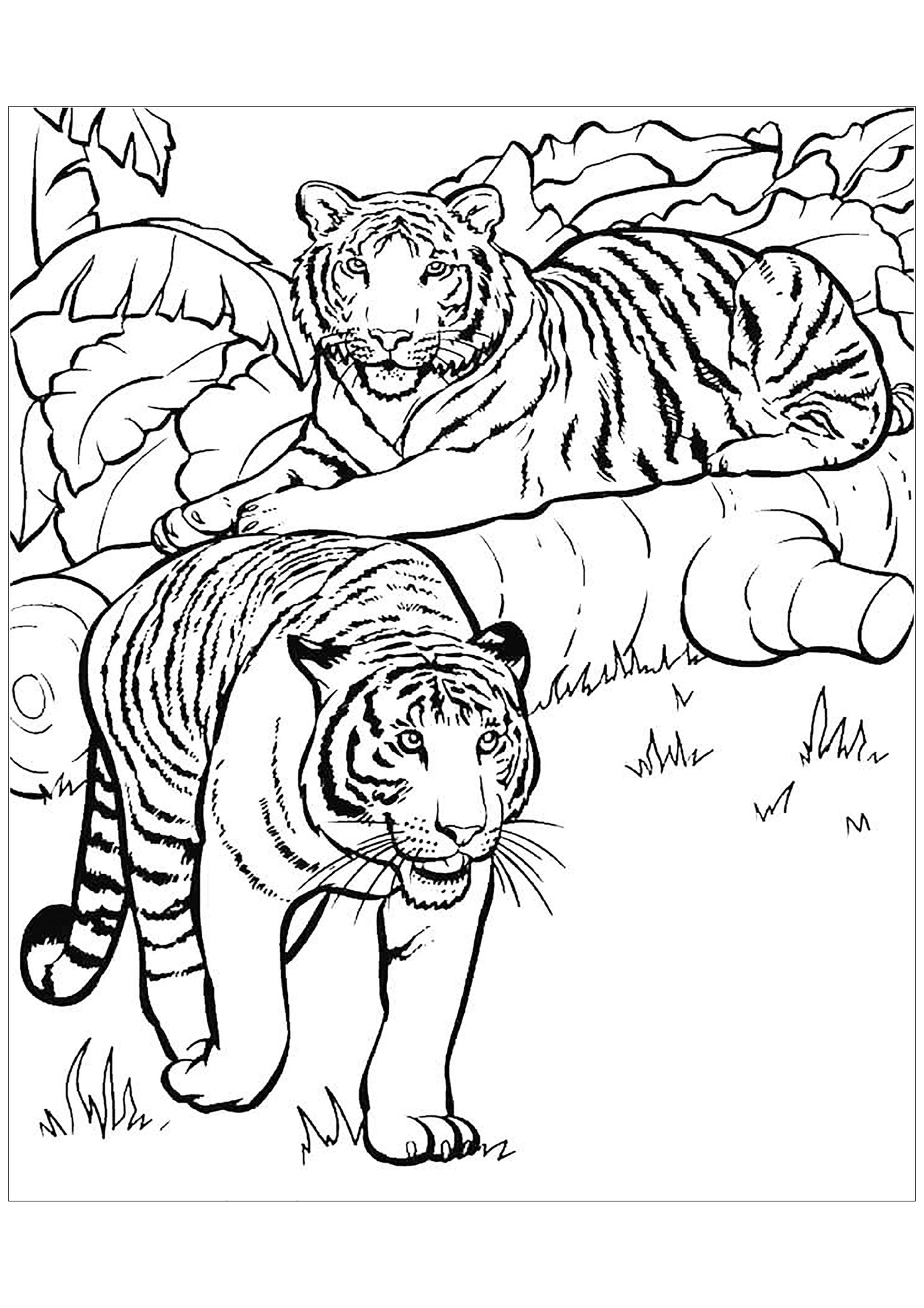 Dessin De Tigre Gratuit A Telecharger Et Colorier Coloriage De Tigres Coloriages Pour Enfants