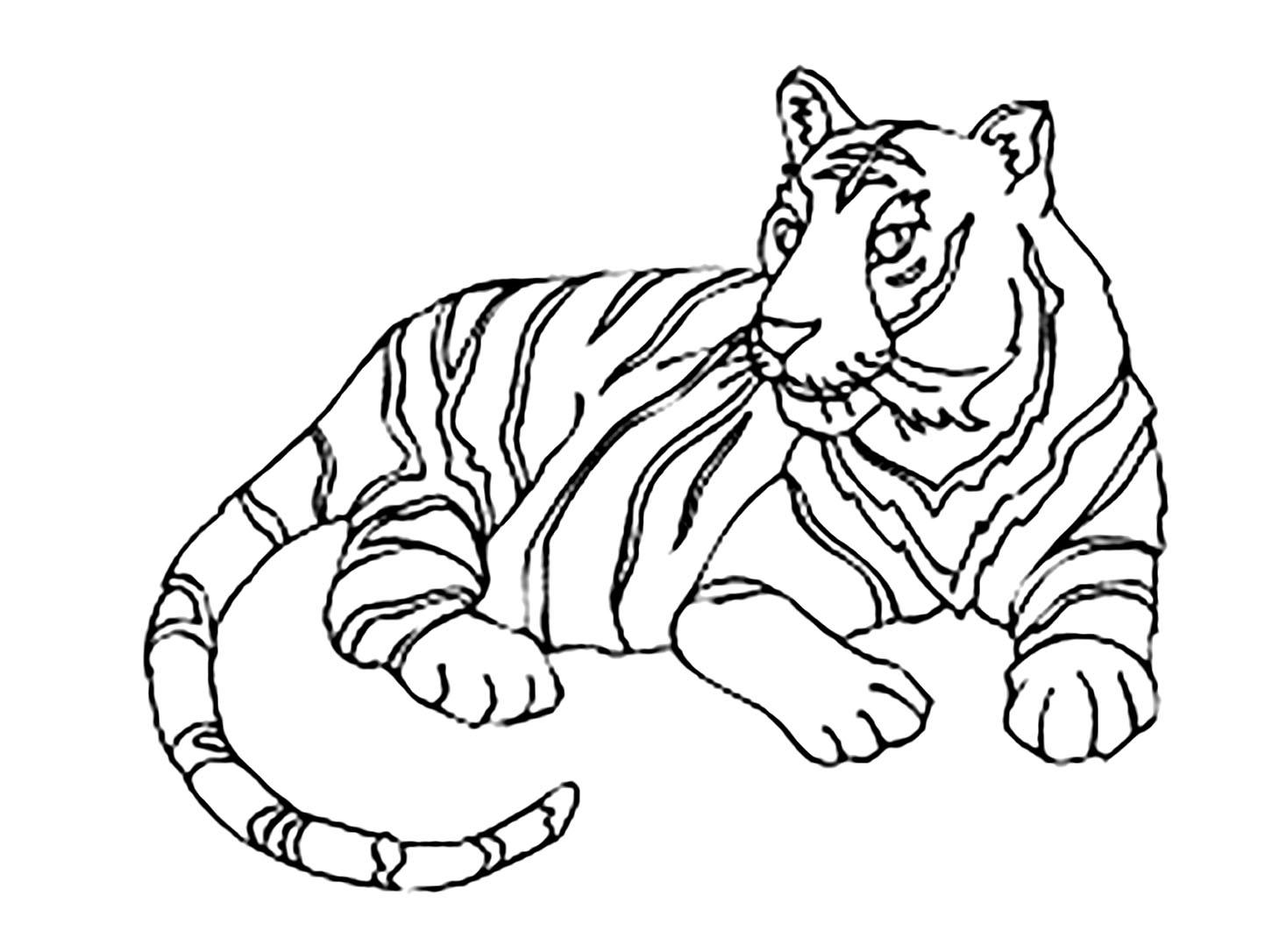 Tigre 12