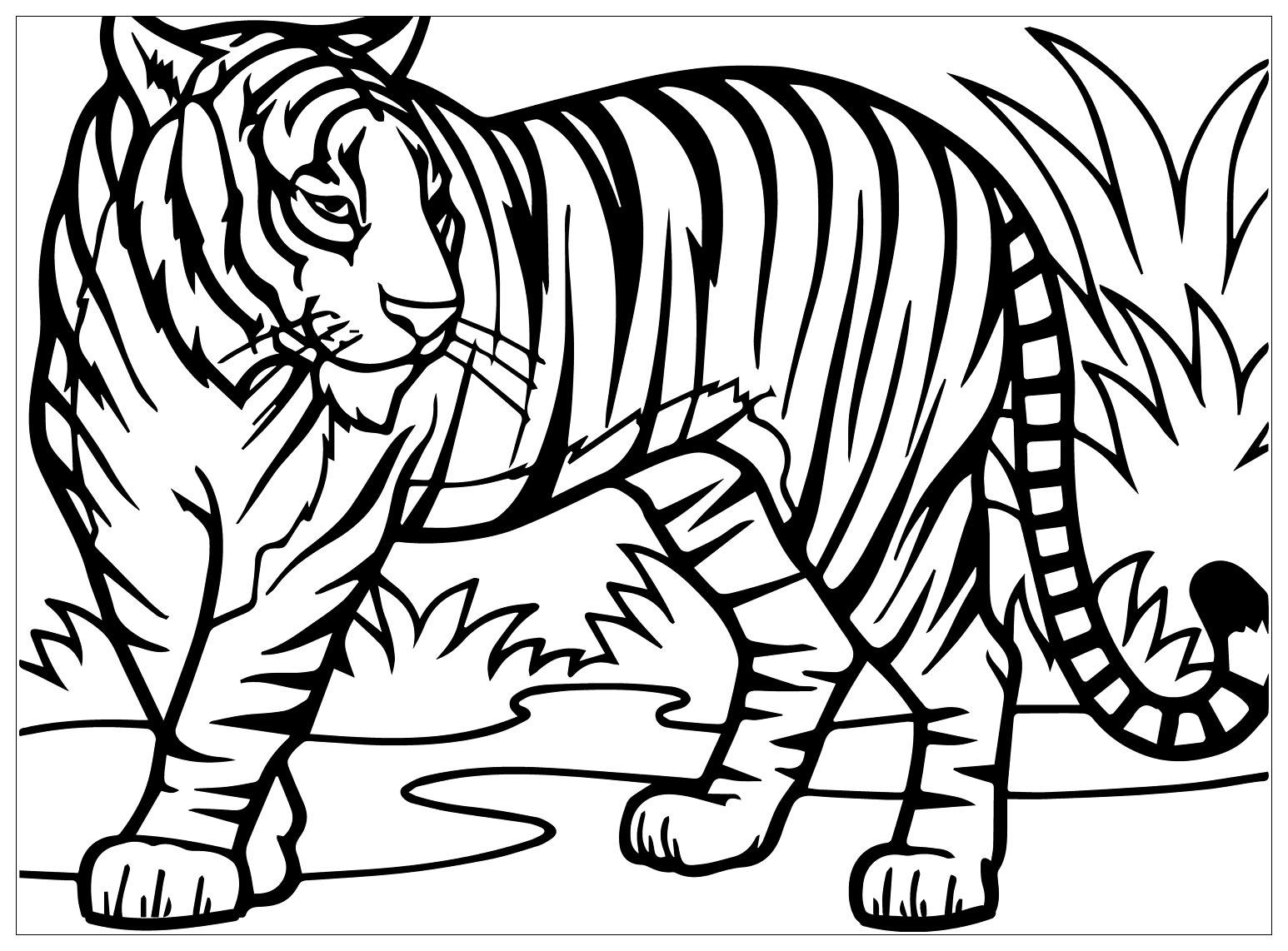 Joli coloriage de tigre simple pour enfants