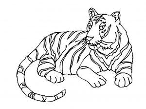 Coloriage de tigre à imprimer pour enfants
